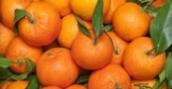 Truco para pelar las chinas mandarinas